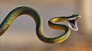 Змеи - строение и эволюция. Рассказывает зоолог Андрис Чейранс