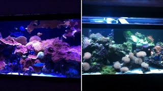 Coral Reef Aquarium Documentary Season 1 Episode 1