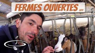 Visite de fermes d'élevage, chèvres et cochons - 2017