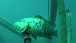 Trinidad and Tobago Spearfishing - East Coast