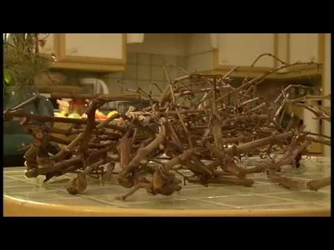 DIY Dco Déco branches : mettez des arbres dans votre maison
