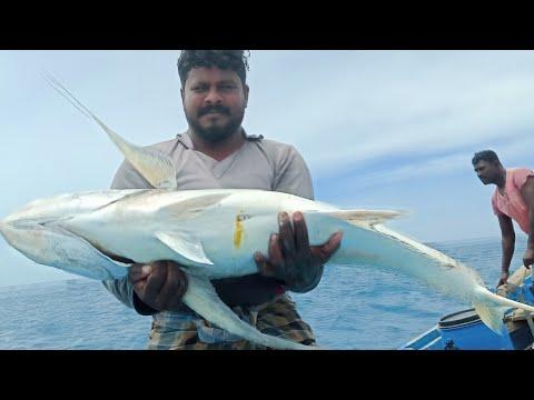 ராட்சத பாரை மீன் / Giant Trevally Fish | Tamil | Ungal Meenavan