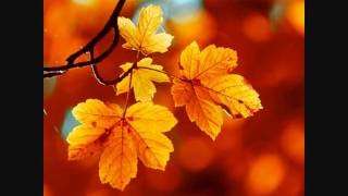 A-Ha - Sycamore Leaves