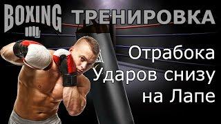 Бокс Тренировка, Отрабока Ударов снизу на Лапе