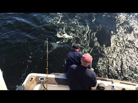 Alaska King Salmon fishing --- live video from Perfect Day Fishing Charters