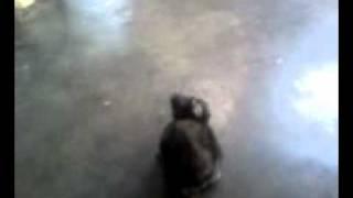 Phim Hoat Hinh | Cute baby rabbit boboboi | Cute baby rabbit boboboi