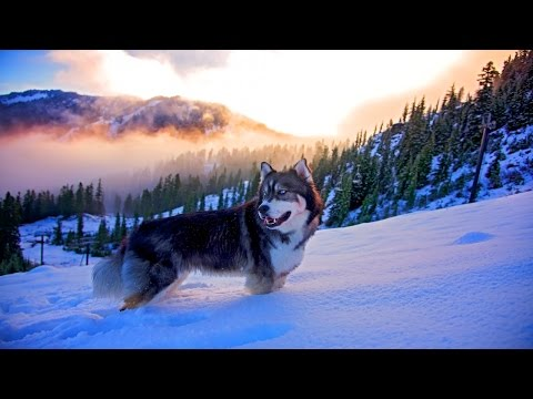 🌍Природа от которой захватывает Дух 4к | Best Nature beautiful Ultra HD 4k - Ржачные видео приколы