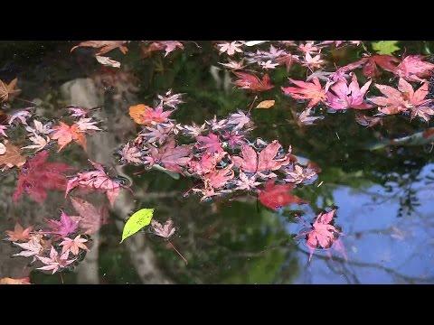 Booker Ervin Quintet - Autumn Leaves