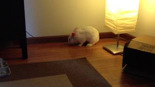"""Presenting the """"bunny flop"""" feat. Lucky"""