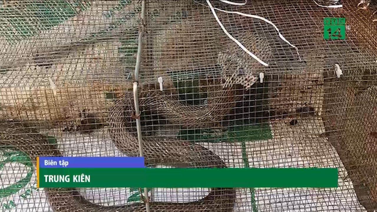 """Rắn độc """"bủa vây"""" tòa chung cư mới ở Hà Nội   VTC14"""
