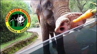 Taman Safari Indonesia Bogor, Liburan Seru Kenyra