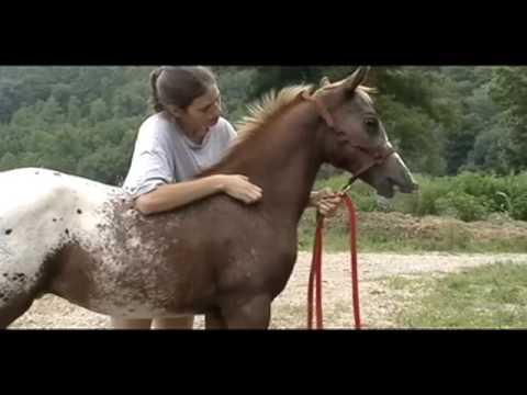 Half Arabian/Appaloosa Colt--Thee Indian Outlaw ABC