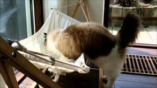 Кот учится пользоваться своим гамаком