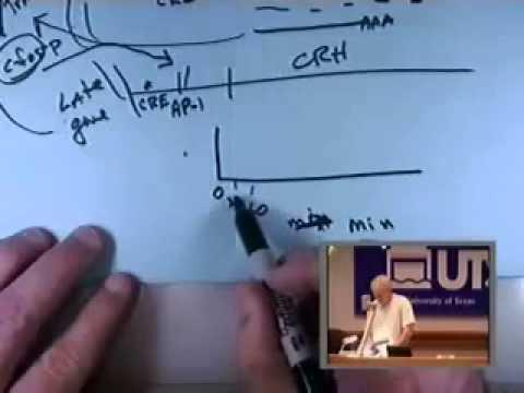 BIO5453_Promoter-analysis-1