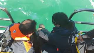 La tartaruga Lenny torna in mare dopo 8 mesi