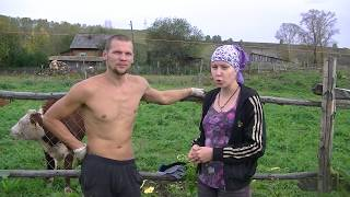 Ещё раз о содержании коров и свиней // Жизнь в деревне