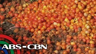 Rated K: All About Kamatis