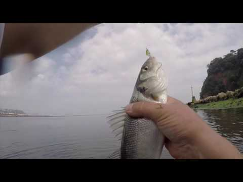 Lure Fishing Fast Eastuaries For Sea Bass