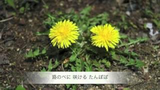 たんぽぽ 三好達治作詞 中田喜直作曲 テノール 井原義則 ピアノ 舘 美里...