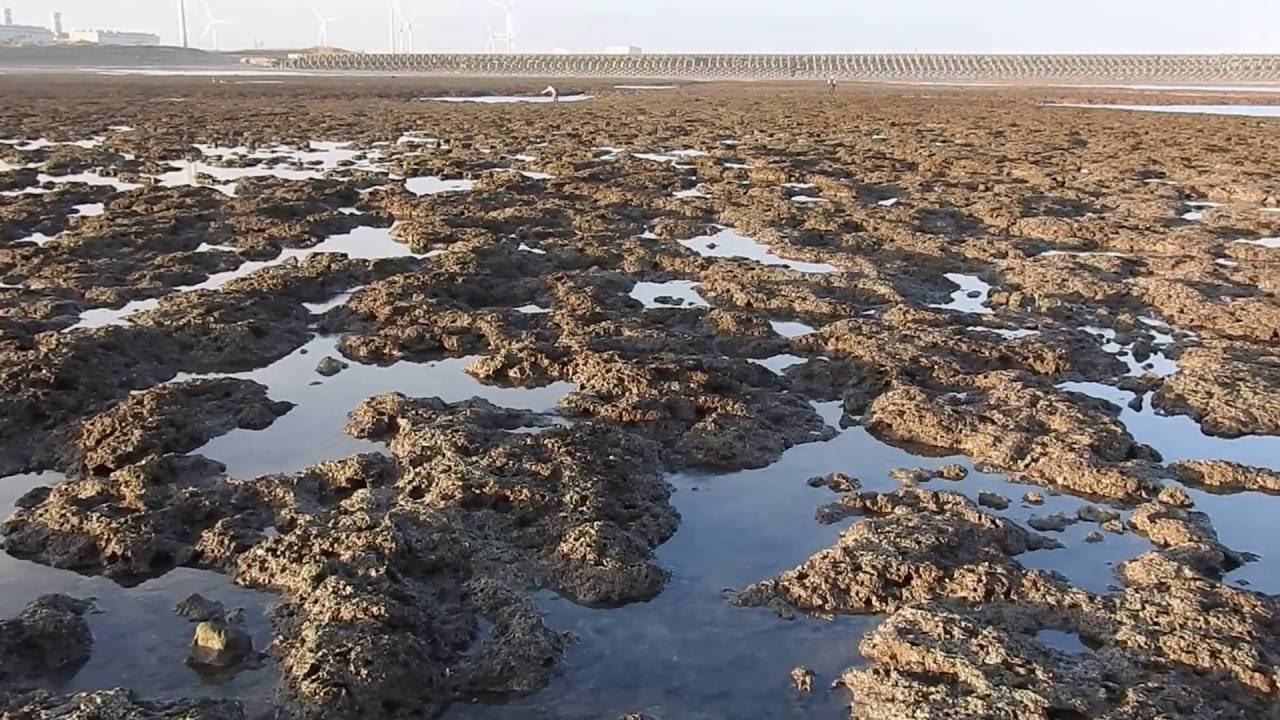 大潭藻礁是全臺最壯闊的藻礁群 - YouTube