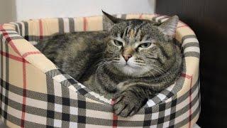 ♥Полезные ПОКУПКИ для моих животных с Zoogoods♥Бешеная кошка и когтеточка)