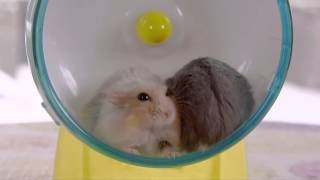 Two Hamsters One Wheel