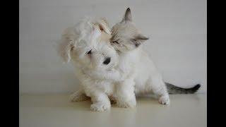 オルゴールBGM著作権フリー[癒し作業用]子犬と一緒