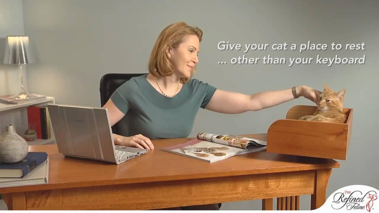 kitt-in box desk cat bed from the refined feline