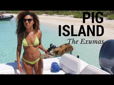 Swimming pigs in Exuma   The Bahamas