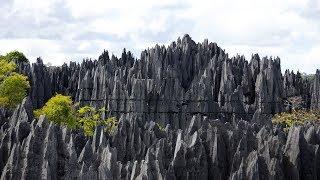 Мадагаскар – остров каменного леса!