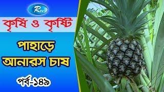 Krishi O Krishti | পাহাড়ে আনারস চাষ | Episode-149 | Rtv Lifestyle