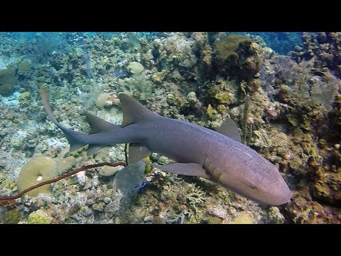 Diving Grand Cayman: 2016 (Extended Version)