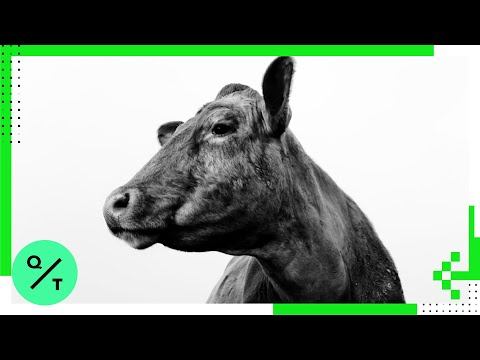 Why We're Moo-ving Toward Decarbonization