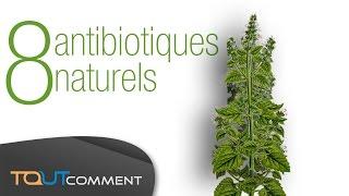8 antibiotiques naturels et disponibles sans ordonnances