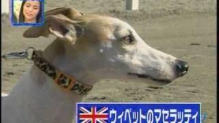 陸上競技【100M】対決 ウサイン・ボルトVS犬。M,Y