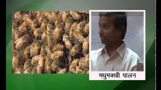 Madhumakhi palan - Rani madhumakhi.mp4