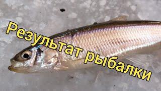 Результаты конкурса Ловля на махалки Подледная рыбалка Сахалинская рыбалка Sakhalin fishing