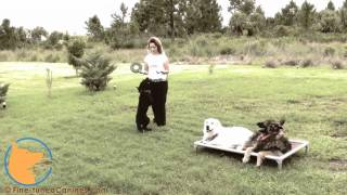 Lexi Hayden's Fine-tuned Canines - Naples Florida Dog Training