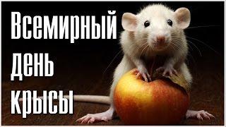 Всемирный день крысы. 4 апреля