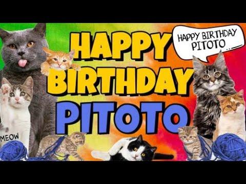 Download Happy Birthday Pitoto! Crazy Cats Say Happy Birthday Pitoto (Very Funny)