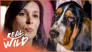 The Pet Psychic: The Woman Who Talks To Dogs | Ronnies Animal Crackers | Real Wild