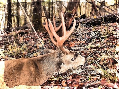 Oregon BlackTail Bow Hunting Kill Shot The Late Season HawkeyeBilt Game Carts