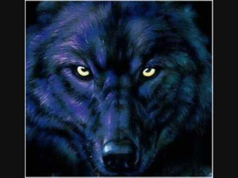 злой волк фото на телефон диагностика