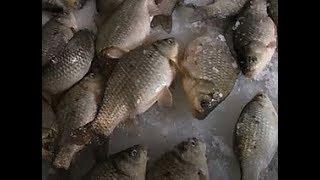 Ловля Крупного КАРАСЯ Зимой со льда Ночная рыбалка
