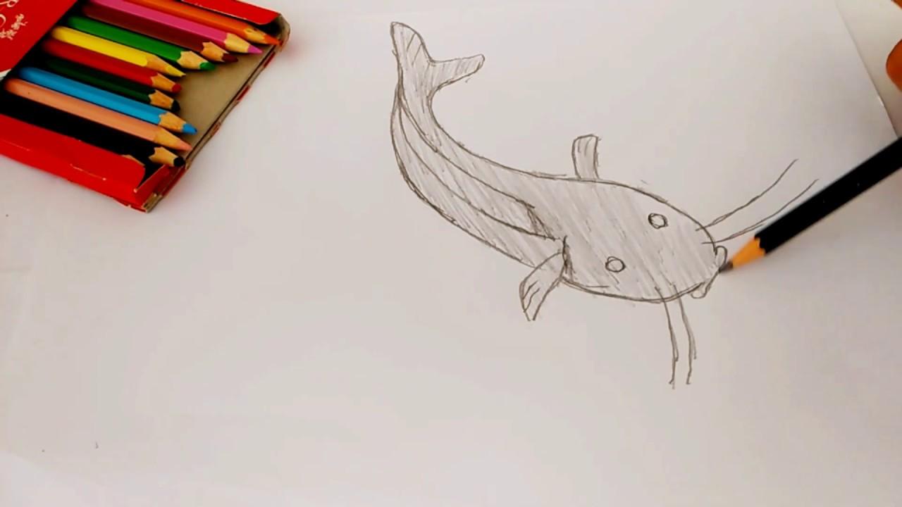Download 990 Koleksi Gambar Ikan Lele Mewarnai HD Terbaik
