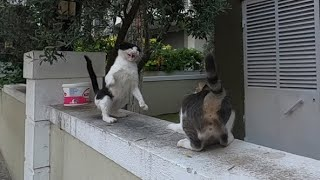 Jealous cat attacked the other cat approaching me