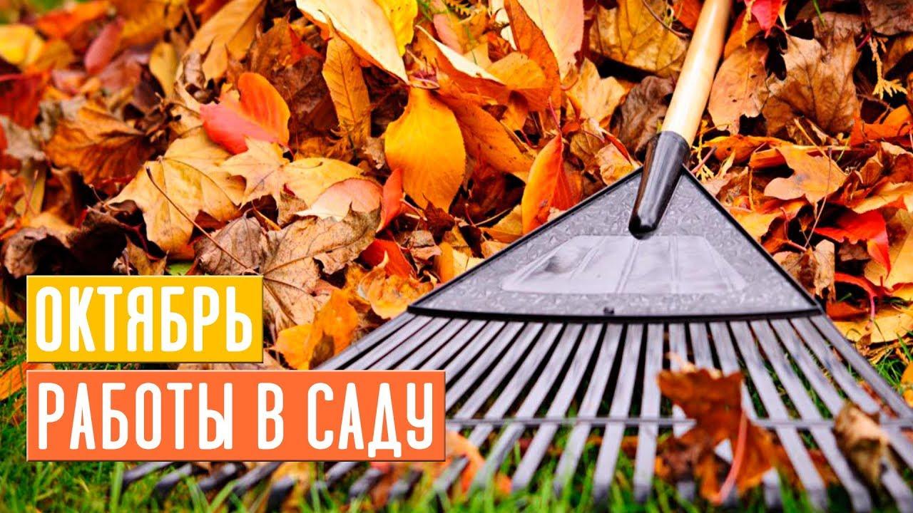 Основные работы в саду в октябре 🔥 Завершаем дачный сезон / Садовый гид