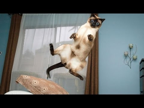 Funny Animal Videos ★ Crazy Cats Jump Fails Videos 2015 ★ Animals TV
