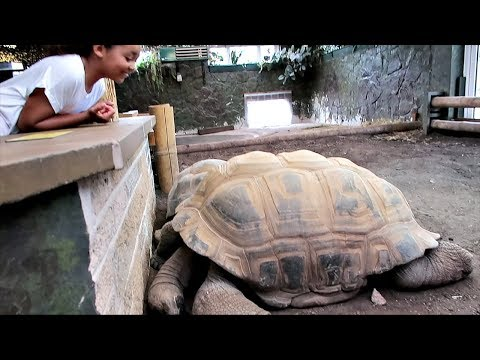 Thumbnail: Kids Family Trip to the ZOO! - Worlds biggest Tortoise & Crazy Monkeys Attack - Educational Video