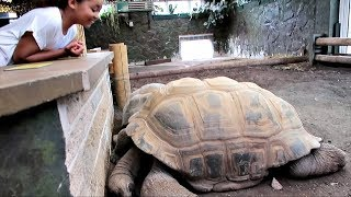Hi Friends, My brother Jordon took us to the ZOO today and we had s...